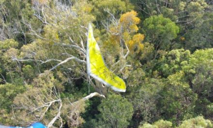 Body of missing hang-glider found following forced landing at Queensland's Rainbow Beach