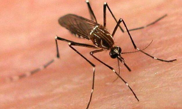 Nine Dengue Cases Reported in Delhi Doctors Advise Precautions
